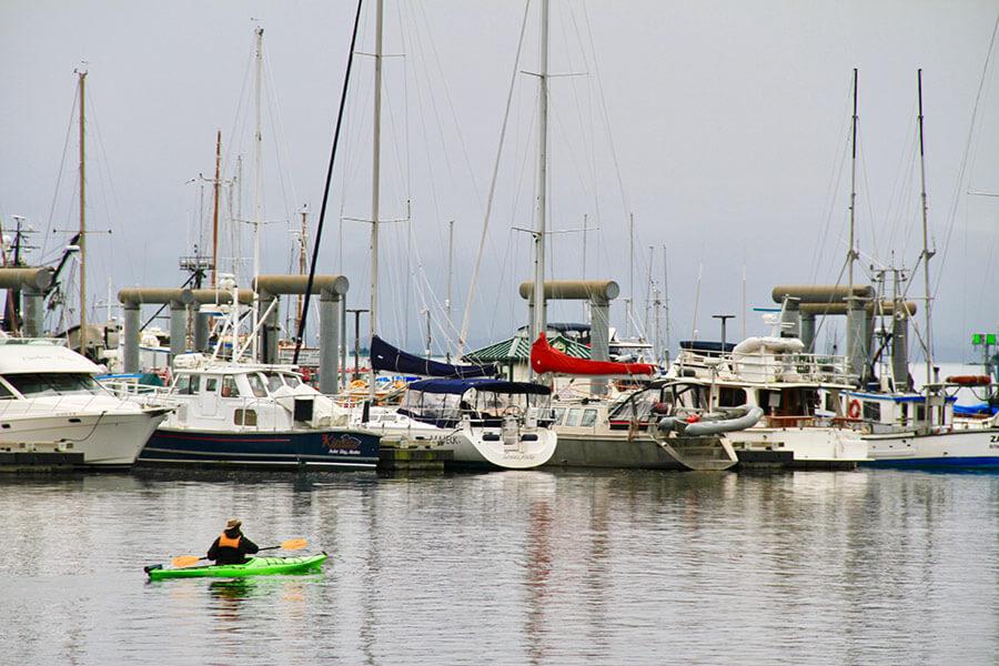 AukeHarborPaddle-kayak-guided-tour