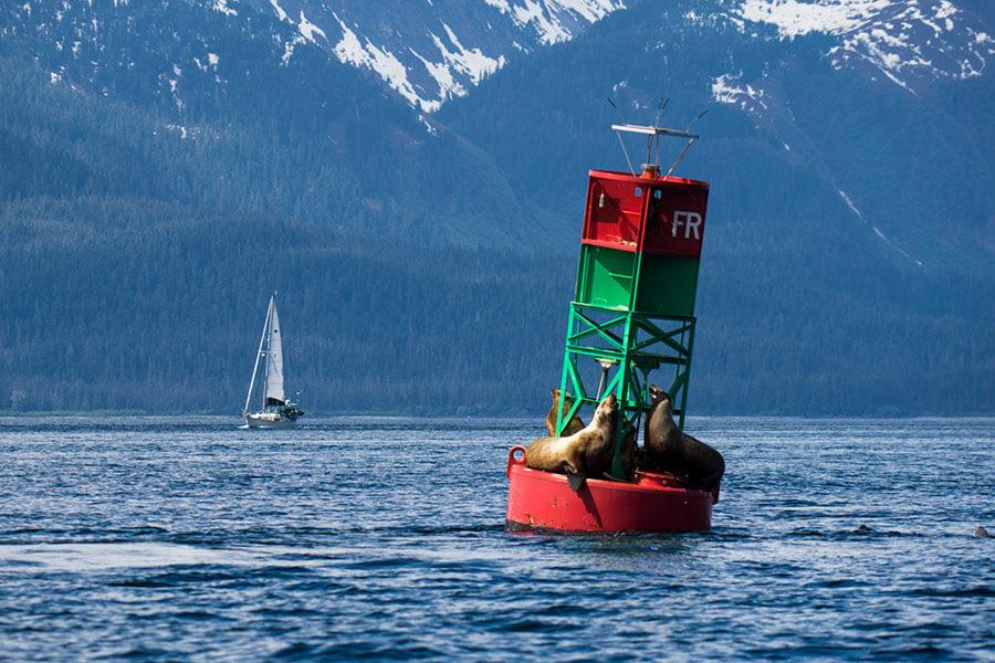 Channel-Island-Wildlife-kayak-tour