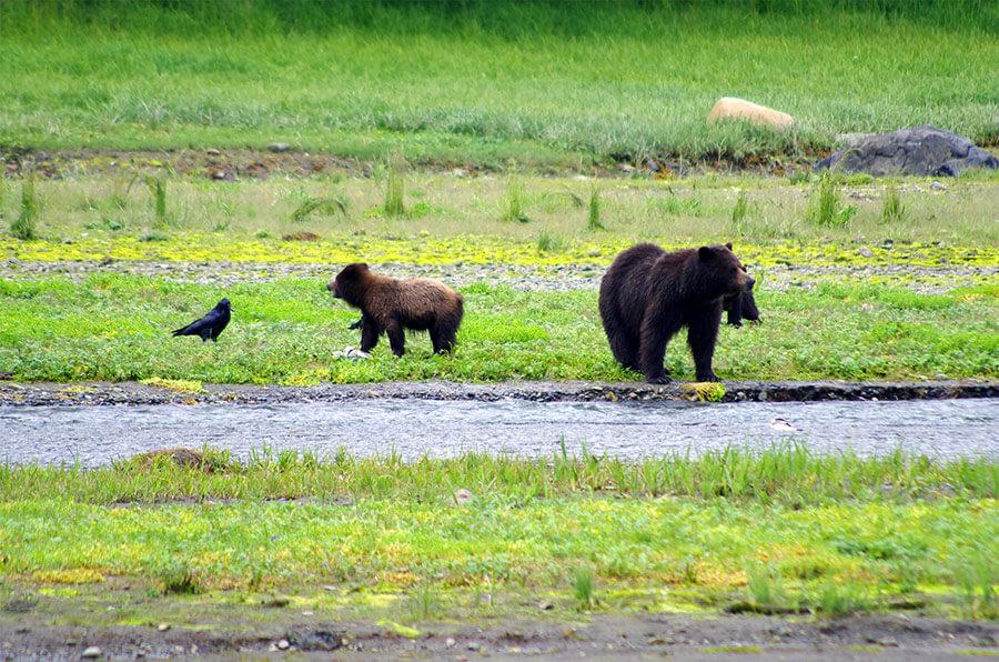 fortress-of-bears-alaska-tours-juneau