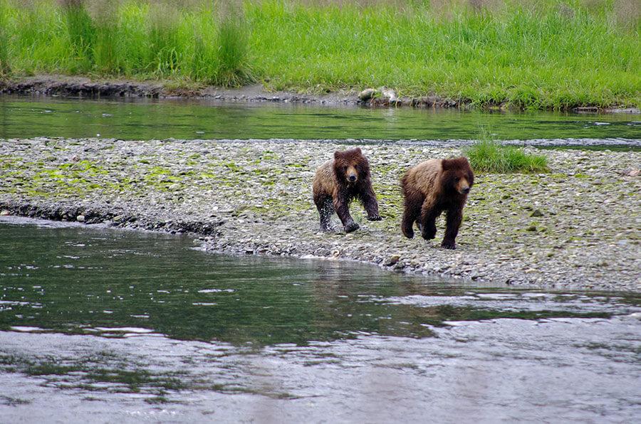 fortress-of-bears-alaska-tours2